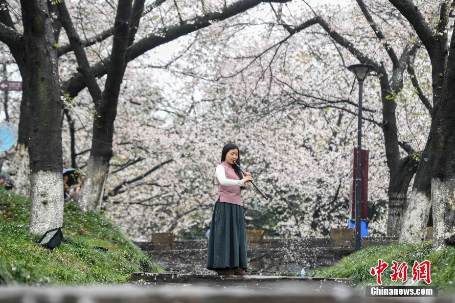 <p>樱花树下吹萧独奏。 杨华峰 摄</p>