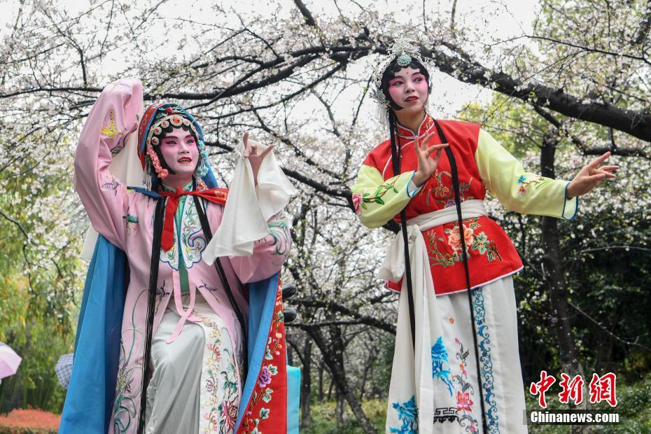<p>昆曲艺术家在樱花树下演唱。 杨华峰 摄</p>
