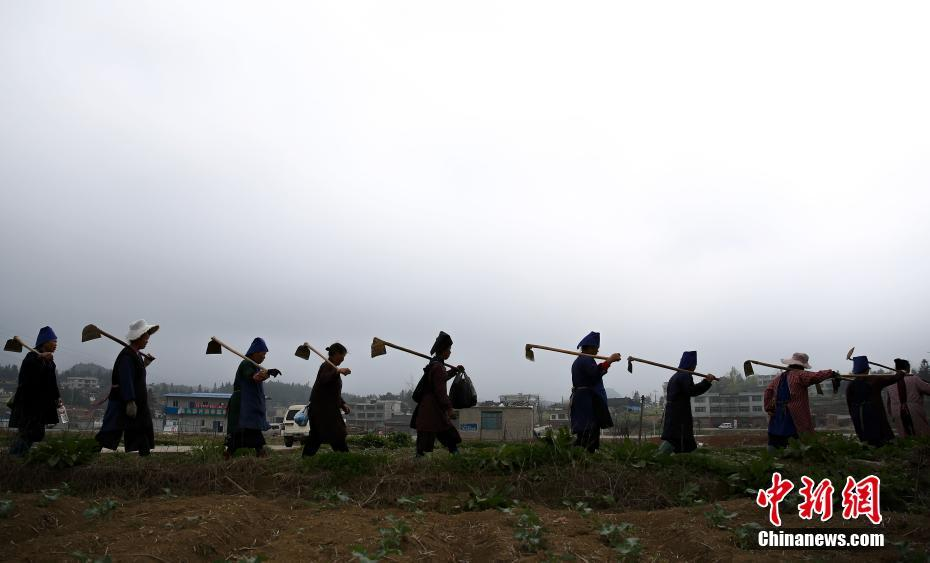 <p>贵州省丹寨县龙泉镇马寨村,农民走在田间。 中新社记者 贺俊怡 摄</p>