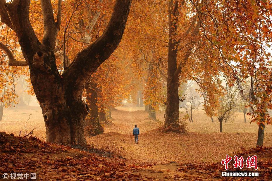 <p>当地时间2016年11月11日,克什米尔斯利那加,一个男孩从落满树叶的路上走过。图片来源:视觉中国</p>