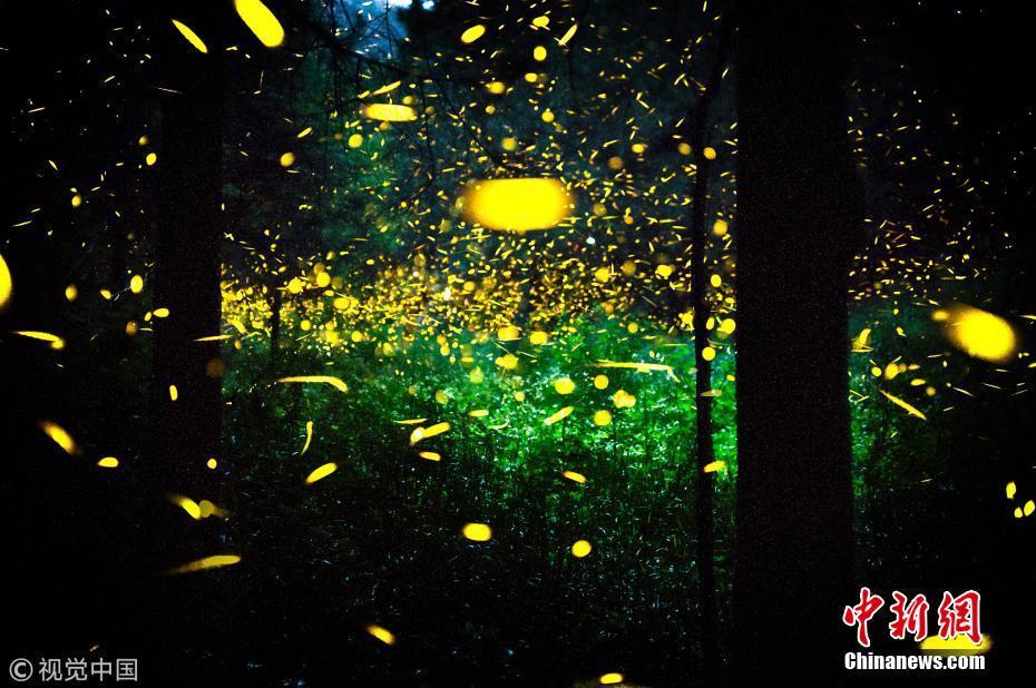 <p>2017年5月22日讯(具体拍摄时间不详),墨西哥特拉斯卡拉,夜晚时分,数千只萤火虫在年久的森林飞舞,如梦似幻。图片来源:视觉中国</p>