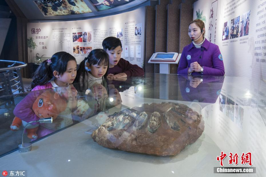 "<p>3月21日,海外追缴国宝级化石特展《龙归故里》在江苏常州中华恐龙园正式对公众开放,拉开了中华恐龙园第七届恐龙文化节的序幕。</p>  <p>据了解,此次《龙归故里》特展由中国地质博物馆、中国海关博物馆、国家古生物化石专家委员会办公室主办。集中展出了近年来从海外追缴的恐龙蛋窝、中国潜龙、陆龟、剑齿虎等国宝级化石。每一块国宝级化石背后都有一个曲折的故事。尤其是领衔本次特展的恐龙蛋窝化石,恐龙蛋窝是22枚窃蛋龙的蛋在一起形成的化石,其中19枚恐龙蛋中还含有初具雏形、蜷缩一团的小恐龙胚胎,有的骨骼轮廓已经相当清晰,极其罕见的恐龙蛋组列方式,具有极高的研究价值,它们第一次亮相是在美国的一场拍卖会上,最早以42万美金成交。历经各部门5年多不懈努力,恐龙蛋窝终于回到祖国的怀抱。</p>  <p>作为此次特展的承办方,中华恐龙园负责人表示,这些国宝级化石能够在中华恐龙园重聚,一方面展示了我国相关部门在保护古生物化石、打击化石走私和开展化石海外追索方面所做的努力和取得的成果,让全社会共同关注、抵制化石走私行为;同时,这些国宝级化石来到常州特展也是一次""回家""的旅程,他们将利用人工智能技术,让游客参观的同时,也能感受到""活起来""的恐龙。</p>  <p>记者在恐龙馆看到,游客在参观恐龙化石时,用手机直接拍摄相关恐龙图片,就可以将恐龙""召唤""到自己的手机上,实现模拟考古,最后一起""复活恐龙""。图为讲解员向小朋友讲解恐龙蛋窝化石的故事。 沈柯辛 摄 图片来源:东方IC 版权作品 请勿转载</p>"