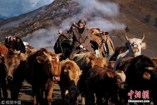 新疆阿勒泰牧民晨曦薄雾中准备迁徙