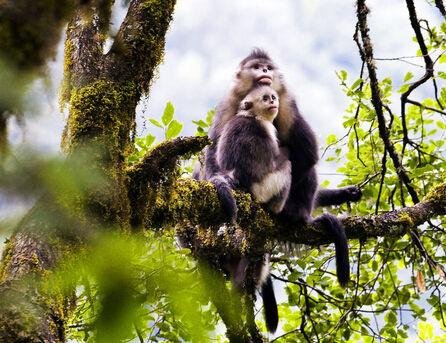 滇金丝猴等46种为国家一级保护动物;列