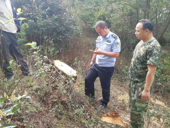 云南禄劝两人盗伐林木被抓获
