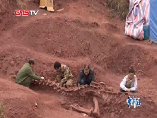 云南村民修路挖出亿年前恐龙化石