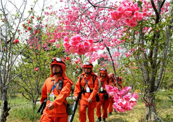 樱花树下美丽的兵
