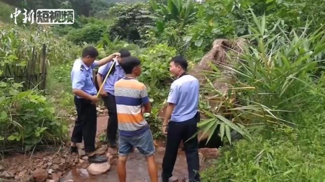 采伐国家重点保护植物并企图贿赂民警 云南一男子被刑拘