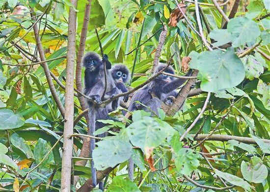昆虫纲动物882种,鸟类703种,国家级,省级保护的野生动物有绿孔雀